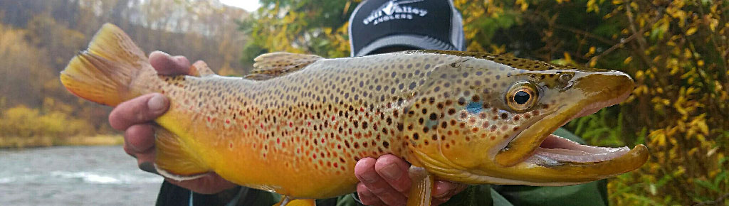 Vail Valley Anglers Guides
