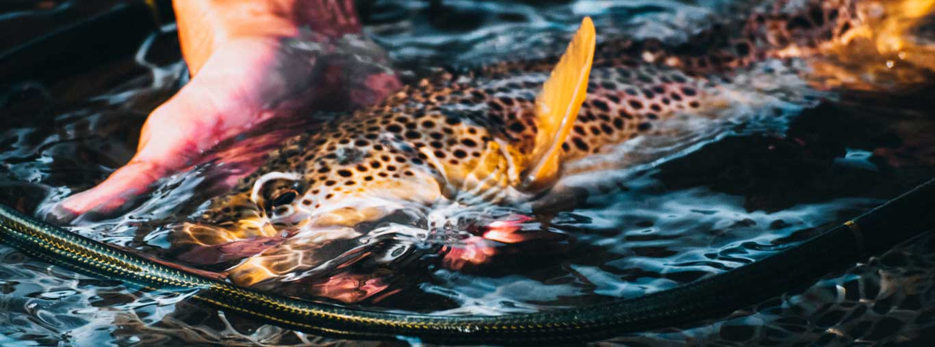 Fly Fishing with Vail Valley Anglers in Vail, CO