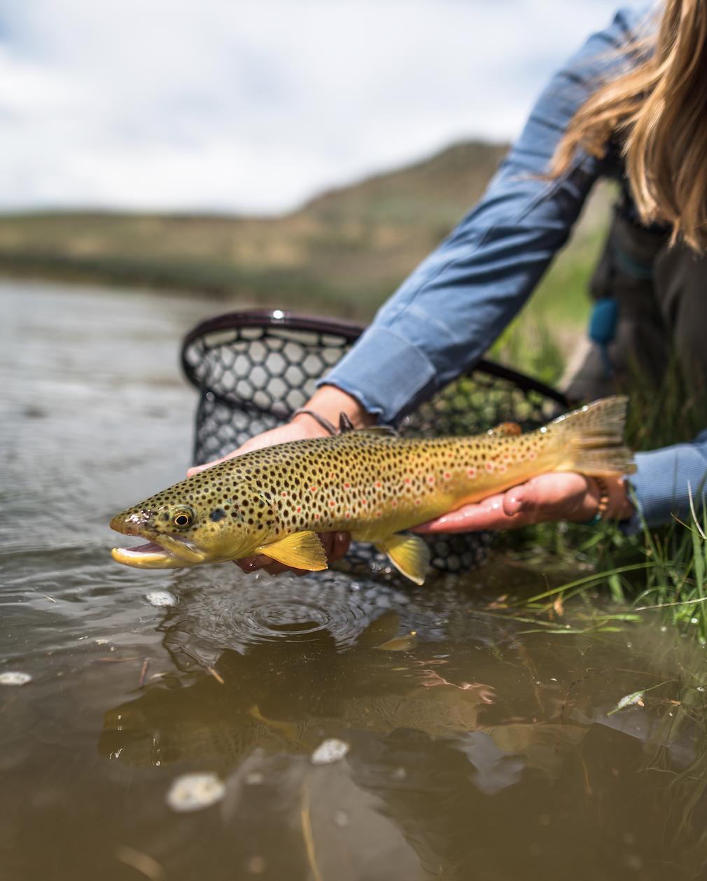 Colorado River Fishing Report | Colorado Fishing Conditions