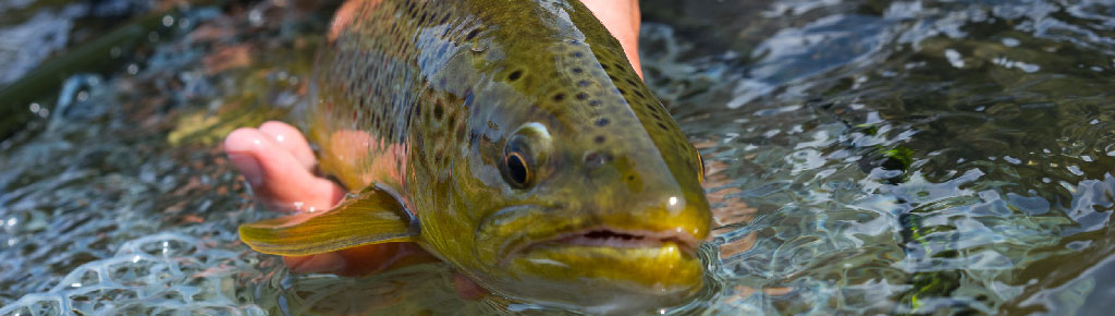 Vail Valley Anglers Guided Private Waters Fishing Trips in Vail, Colorado