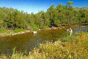 Vail Valley Anglers Guided Fly Fishing Full Day Private Waters Trips in Vail, Colorado.
