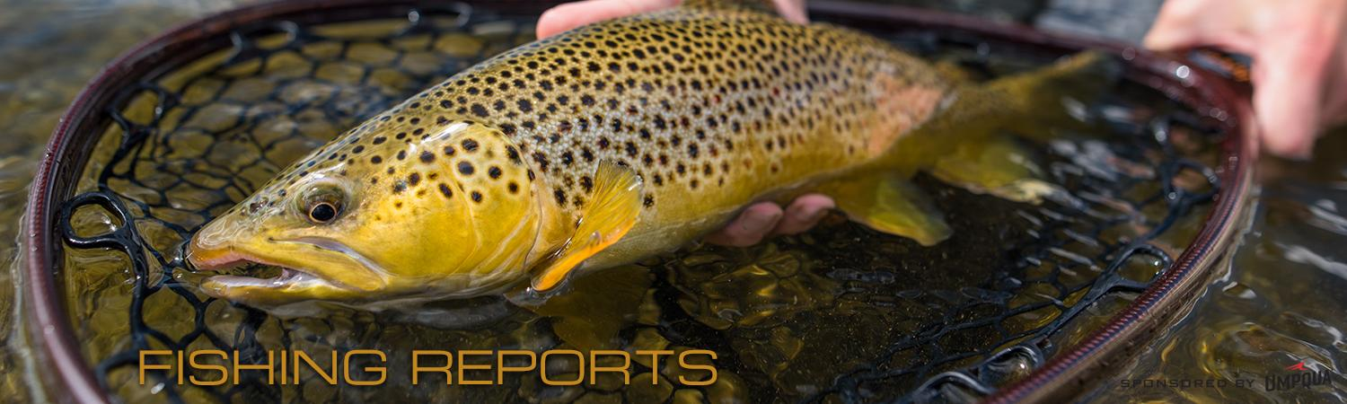 Vail Valley Anglers Colorado River Fly Fishing Reports in Vail, Colorado