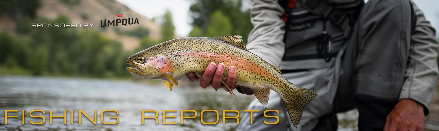 Vail Valley Anglers Fly Fishing Reports in Vail, Colorado